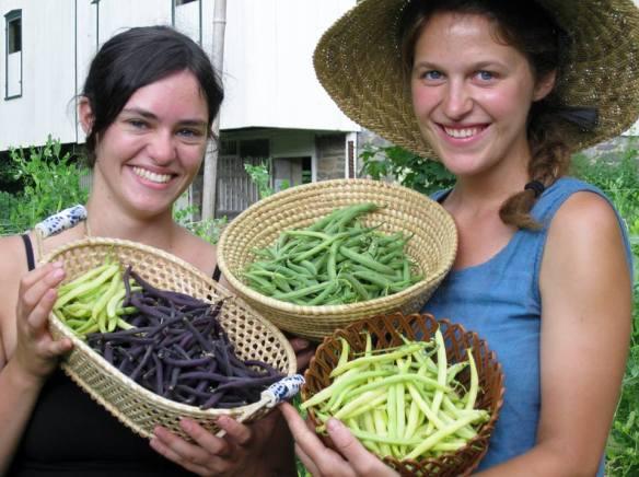 Bean Farmers